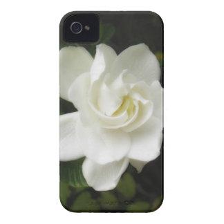 Gardenia blackberry Bold Case