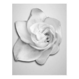 Gardenia blanco postales