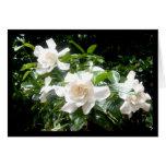 Gardenia, blank card greeting card