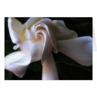 Gardenia card, with poetry card