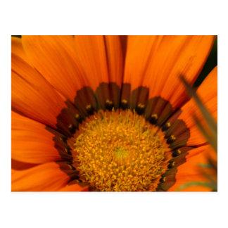 gardenia del garzania en el jardín postal