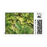 Gardenia Greenery Stamp