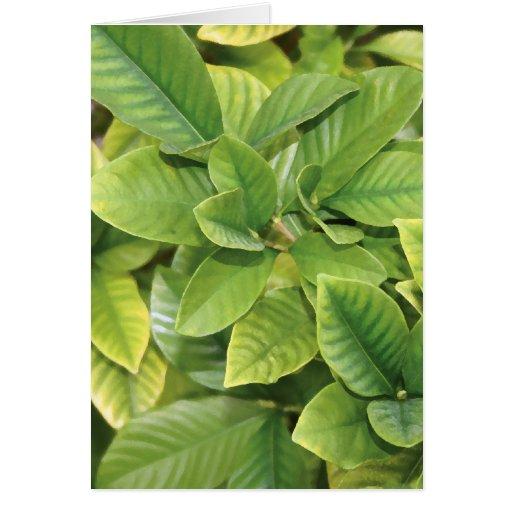 Gardenia Greens Card