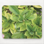 Gardenia Greens Mousepad