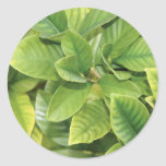 Gardenia Greens Sticker