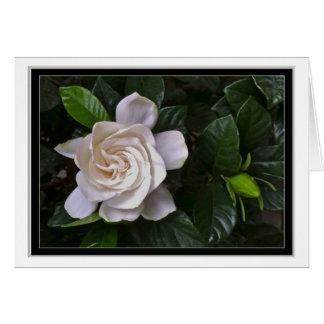 Gardenia Greeting Cards