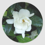 Gardenia Pegatina Redonda