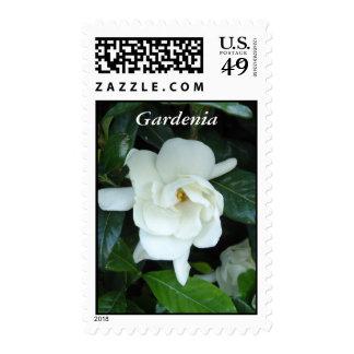 Gardenia Postage Stamp