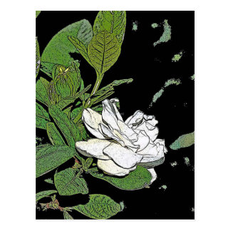 Gardenia Postales