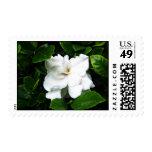 gardenia sello