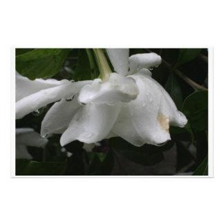 Gardenia Stationary soft elegant look Stationery
