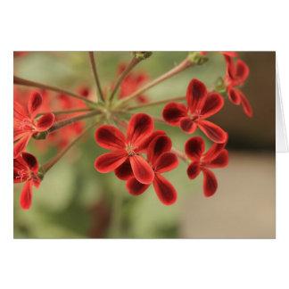 gardenia tarjeta pequeña