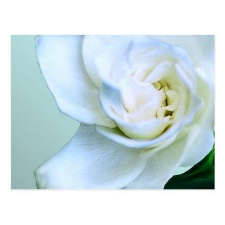 Gardenia Tarjeta Postal