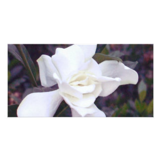 Gardenia tints card