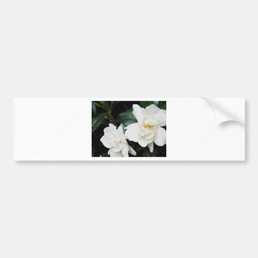 Gardenias Bumper Sticker