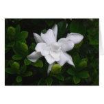 Gardenias de florecimiento Notecard floral