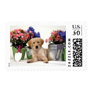 Gardening Golden Retriever Puppy Postage