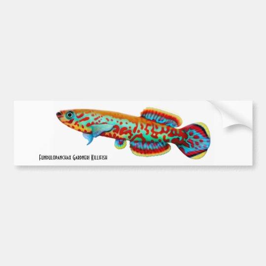 Gardneri Killifish Bumper Sticker