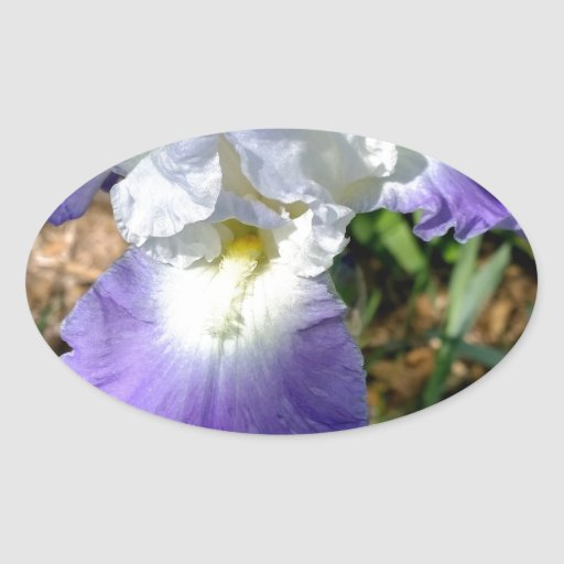 Garganta del iris calcomania de óval