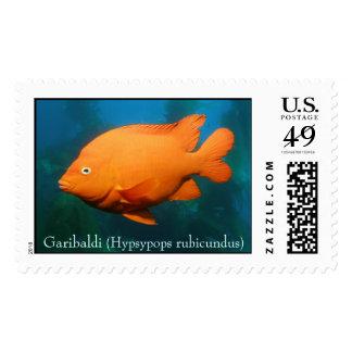 Garibaldi (hypsypops rubicundus) postage
