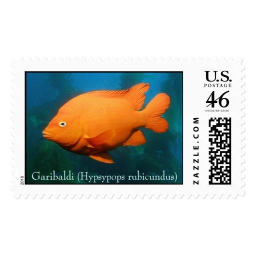 Garibaldi (hypsypops rubicundus) postage stamp
