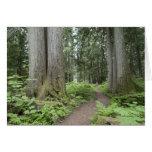 Garibaldi Provincial Park, British Columbia, Greeting Card