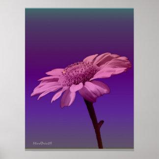 Garland Chrysanthemum Poster
