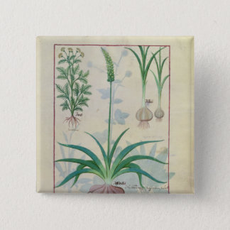 Garlic and other plants pinback button