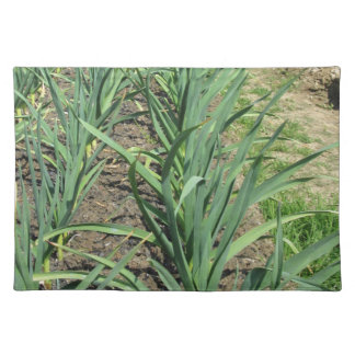 Garlic plants in rows in the garden placemat