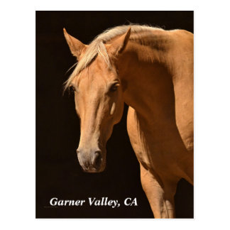 Garner Valley Postcard