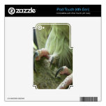 Garras del Cockatiel iPod Touch 4G Skin
