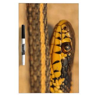 Garter Snake Closeup Dry-Erase Whiteboards