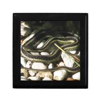 Garter Snake Keepsake Box