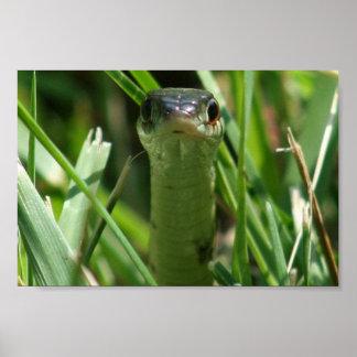 Garter Snake in the Grass Print