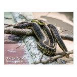 Garter Snake Post Card