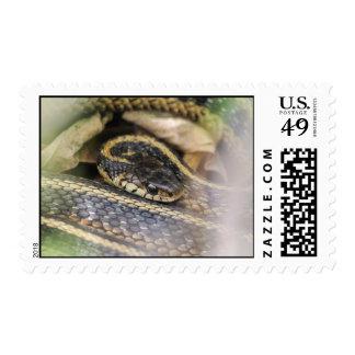 Garter Snake Postage