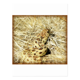 Garter Snake Postcards