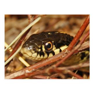 Garter Snake Post Cards