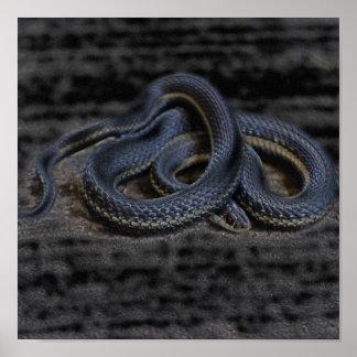Garter Snake Print
