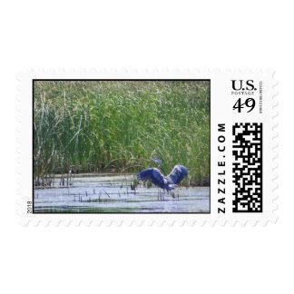 Garza azul en la reserva de Stillwater Sello