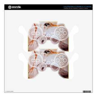 Garza by Albrecht Durer Skins For PS3 Controllers