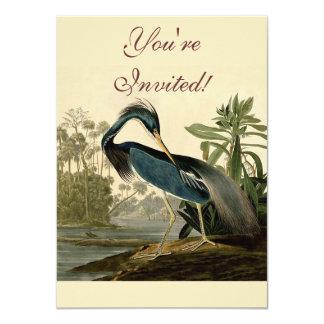 Garza de Audubon Luisiana Comunicados Personales