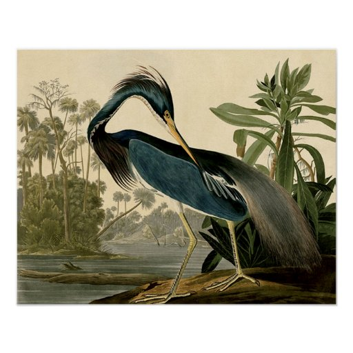 Garza de Audubon Luisiana Póster