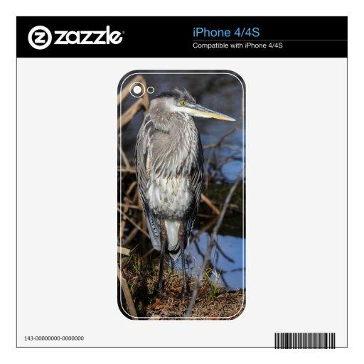 Garza de gran azul calcomanía para iPhone 4S