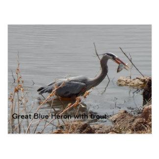 garza de gran azul con la trucha tarjetas postales