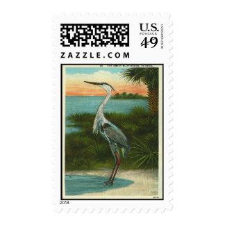 Garza de gran azul del vintage sello