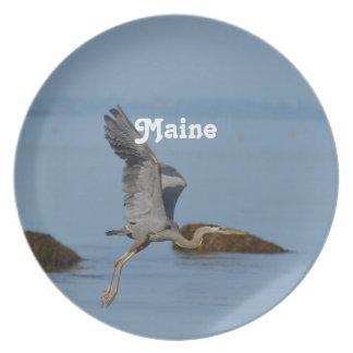 Garza de gran azul en Maine Platos