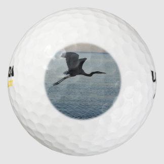Garza de gran azul en Nápoles, FL Pack De Pelotas De Golf