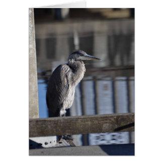 Garza de gran azul gruñona tarjeta de felicitación