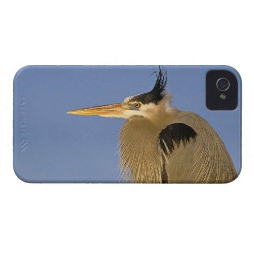 Garza de gran azul, herodias del Ardea, adulto, Case-Mate iPhone 4 Carcasa